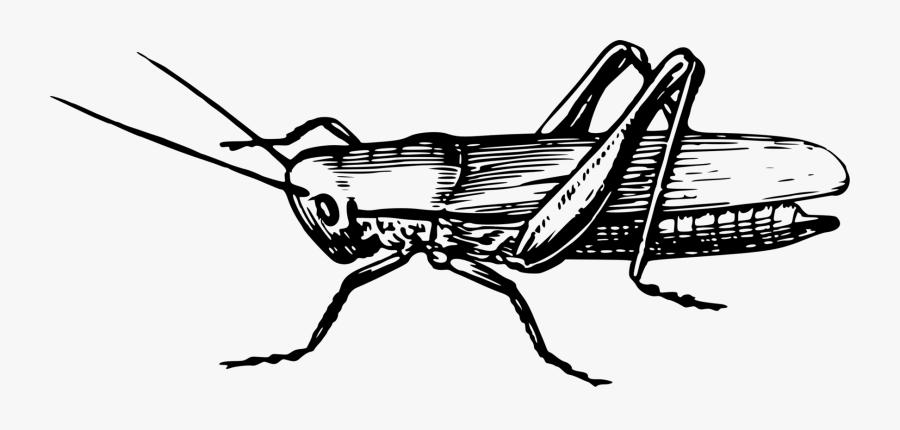 Line - Clip Art Of Grasshopper, Transparent Clipart