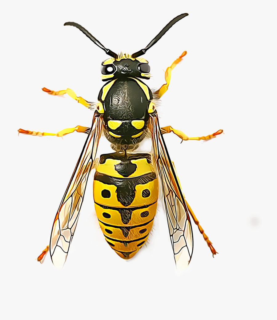 Yellow Jacket Png - Top View Of Wasp, Transparent Clipart