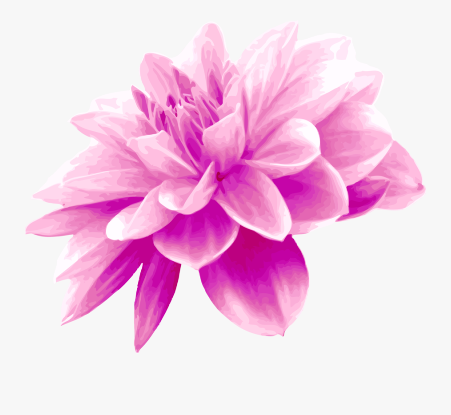 Magnolia Transparent PNG Clip Art Image   Gallery Yopriceville -  High-Quality Images and Transparent PNG Free Clipart