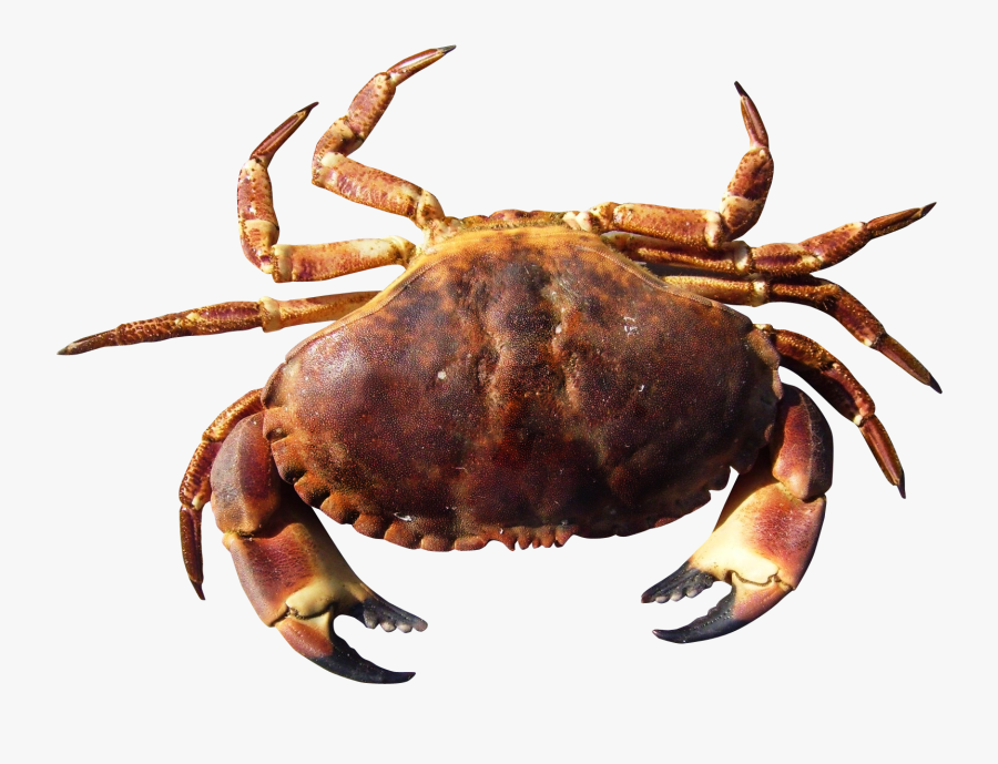 Crab Png Transparent, Transparent Clipart