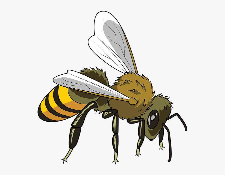 Honeybee, Transparent Clipart