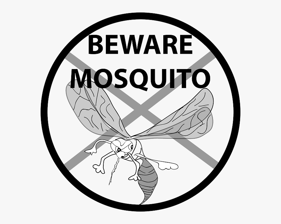 Dengue Mosquito Black And White, Transparent Clipart