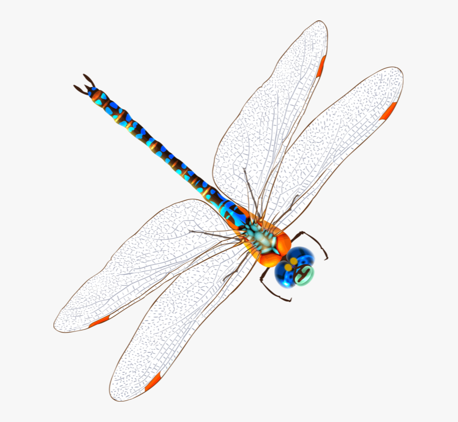 Transparent Insects Clipart - Net-winged Insects, Transparent Clipart