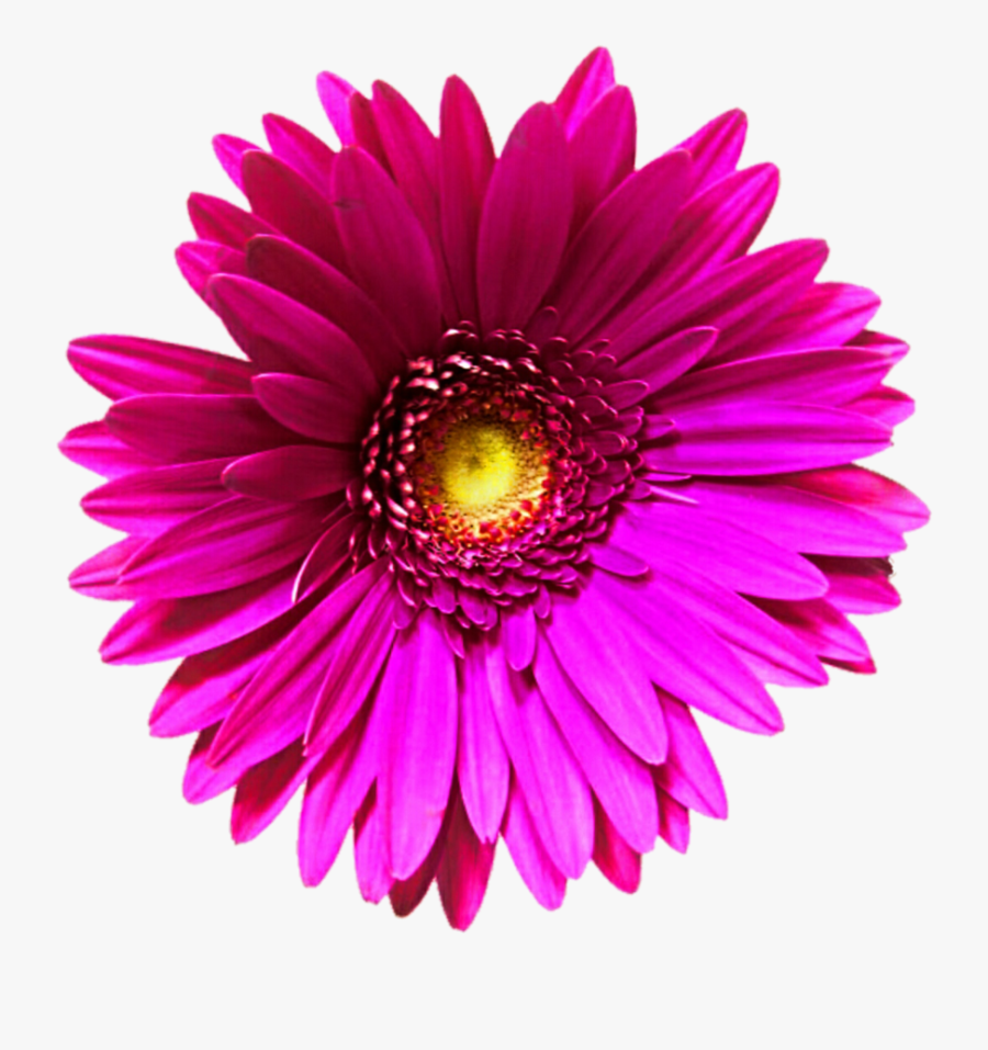Pink Flower Clipart Transparent Background - Single Flower Clipart Transparent Background, Transparent Clipart