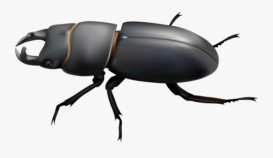 Beetle Clipart Clip Art - Beetle Clipart Png, Transparent Clipart