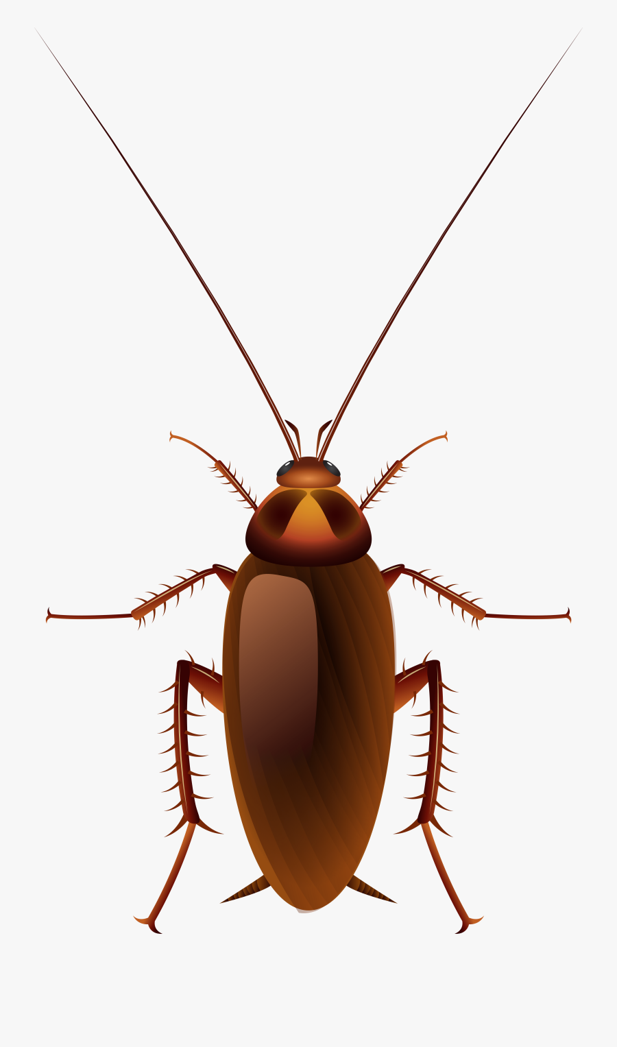 Insects Clipart Beautiful Animal - Black Cockroach Cartoon, Transparent Clipart