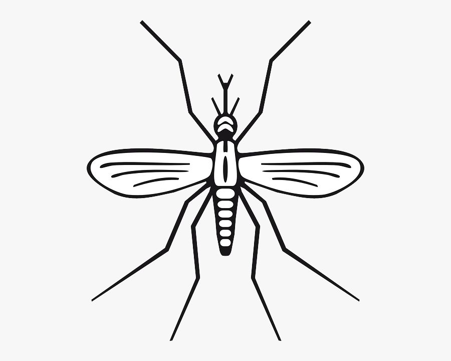 Clip Art Insects Drawing - Mosquito Clip Art, Transparent Clipart
