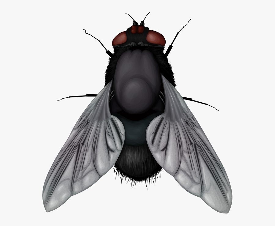 Fly Png Image - Fly Png, Transparent Clipart