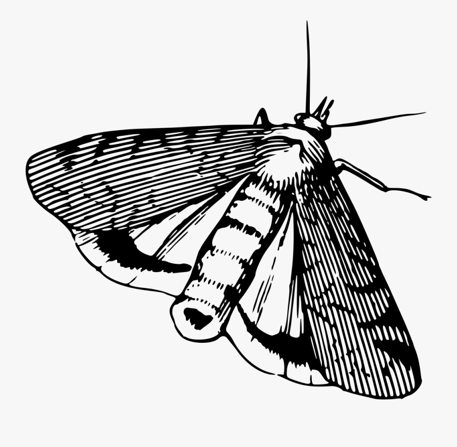 Moth,moths And Butterflies,monochrome - Moth Black And White Clipart, Transparent Clipart