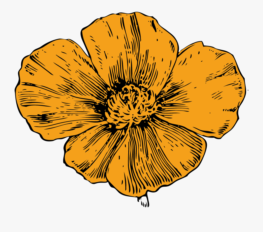 California Quail Clipart, Vector Clip Art Online, Royalty - California Golden Poppy Drawing, Transparent Clipart