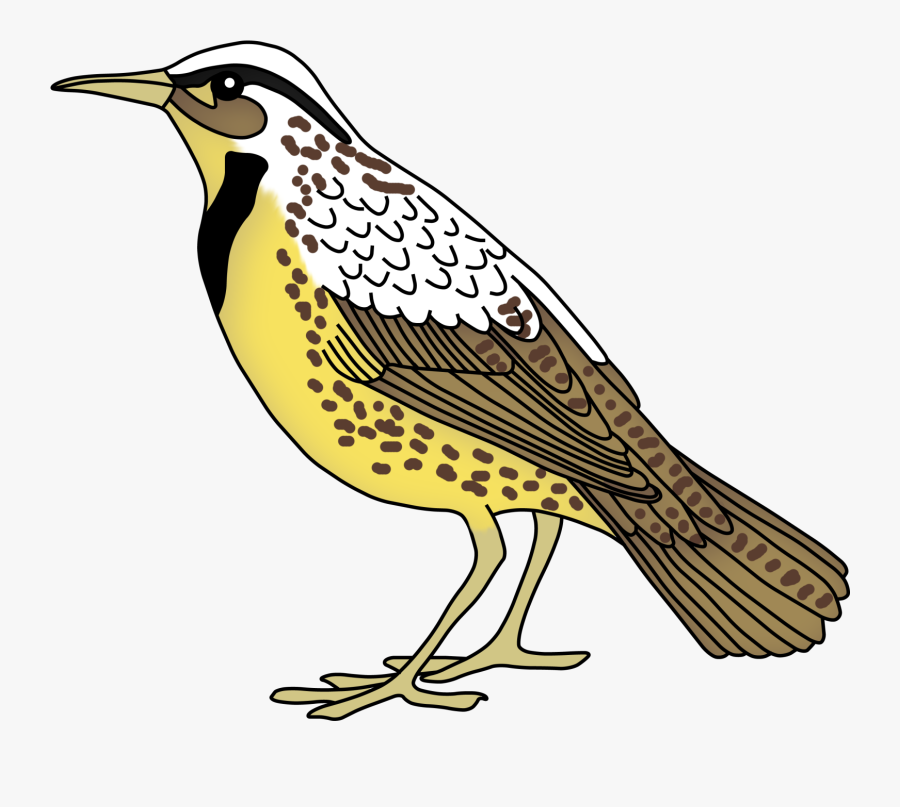 Teacher Treasure Hunter May - Meadowlark Clip Art, Transparent Clipart