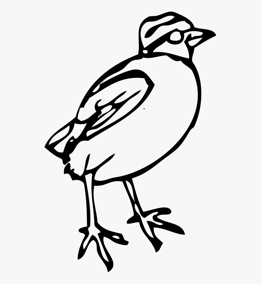 Quail Black And White Clipart - Bird Clipart, Transparent Clipart