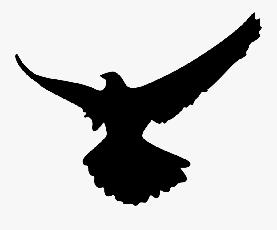 Transparent Eagle Head Clipart Black And White - Shadow Of An Eagle, Transparent Clipart