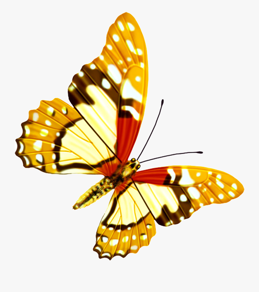 Hd Beautiful Colorful Butterfly Png - Hd Beautiful Png, Transparent Clipart