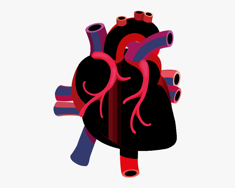 Human Heart Vector Png, Transparent Clipart