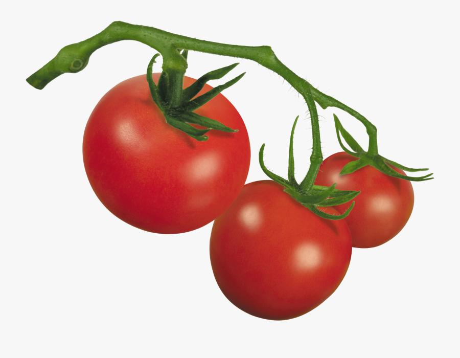 Clipart Of Tomato, Tomato The And Tomato Of - Plum Tomato, Transparent Clipart