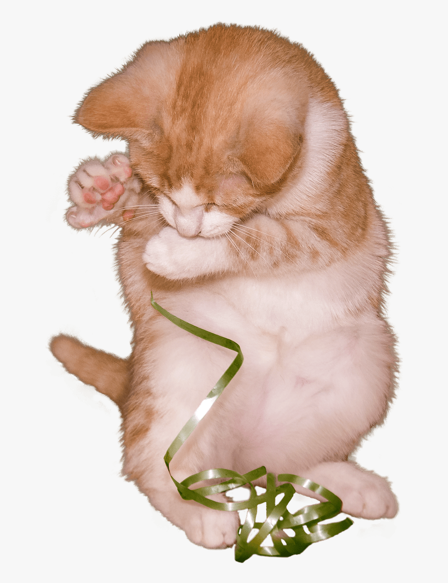 Cat Kitten Playing With Ribbon - Kitten, Transparent Clipart