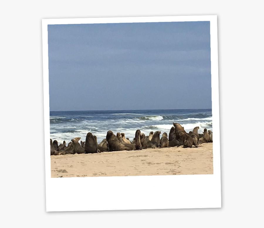 Sea, Transparent Clipart