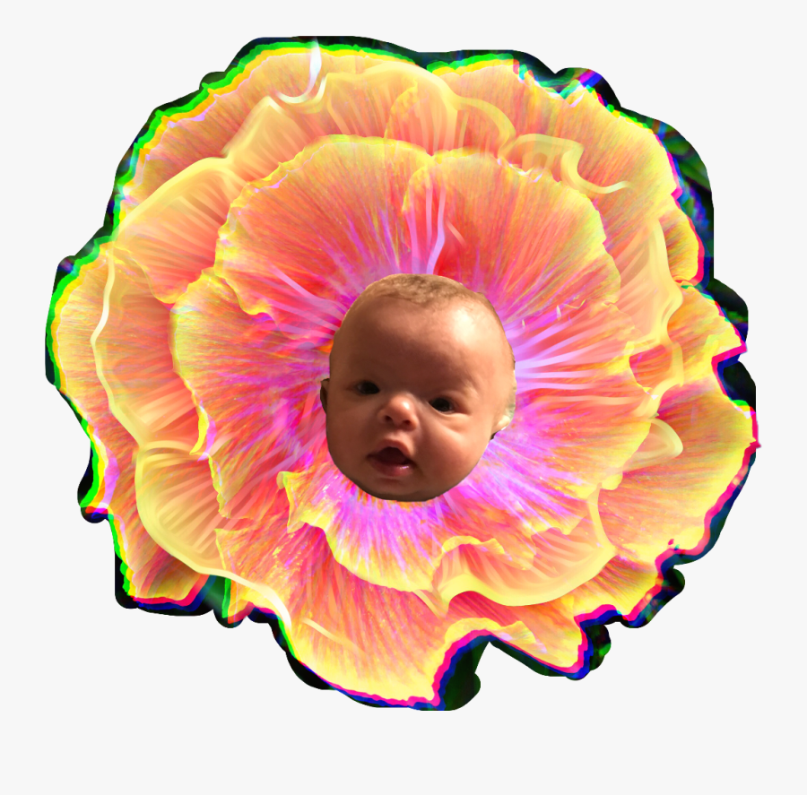Baby, Transparent Clipart