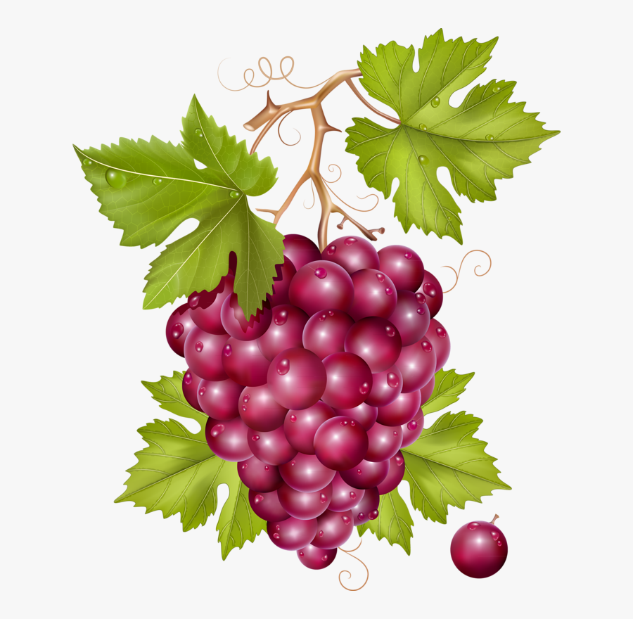 Red Grapes Clip Art, HD Png Download , Transparent Png Image - PNGitem