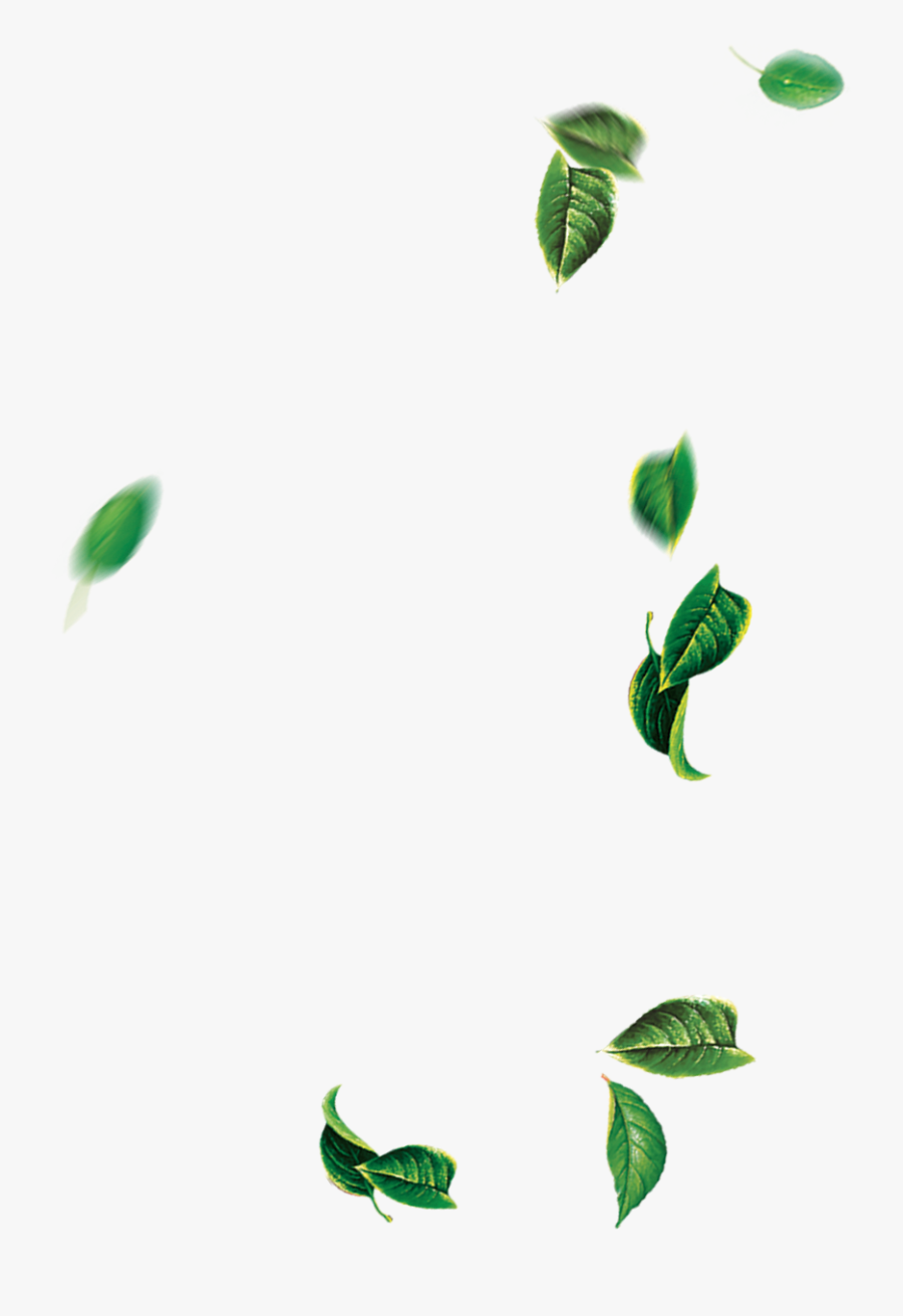 Leaf Green Tree - Falling Tree Leaves Png, Transparent Clipart
