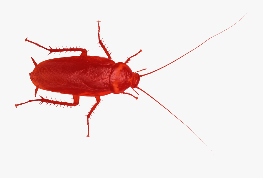 Red Cockroache Red Cockroache Clipart , Png Download - Red Cockroach, Transparent Clipart