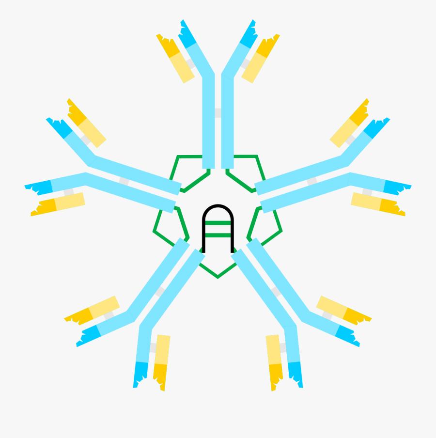 Igm Antibody, Transparent Clipart