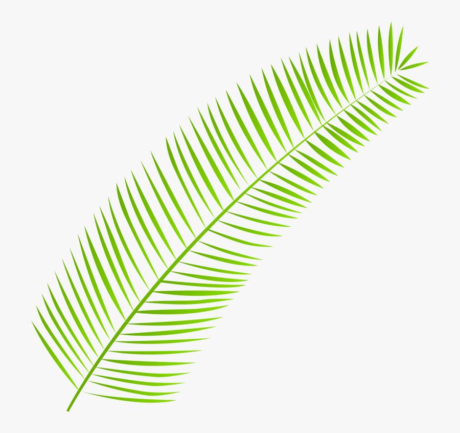 Palm-leaf - Clipart Palm Leaves Png, Transparent Clipart