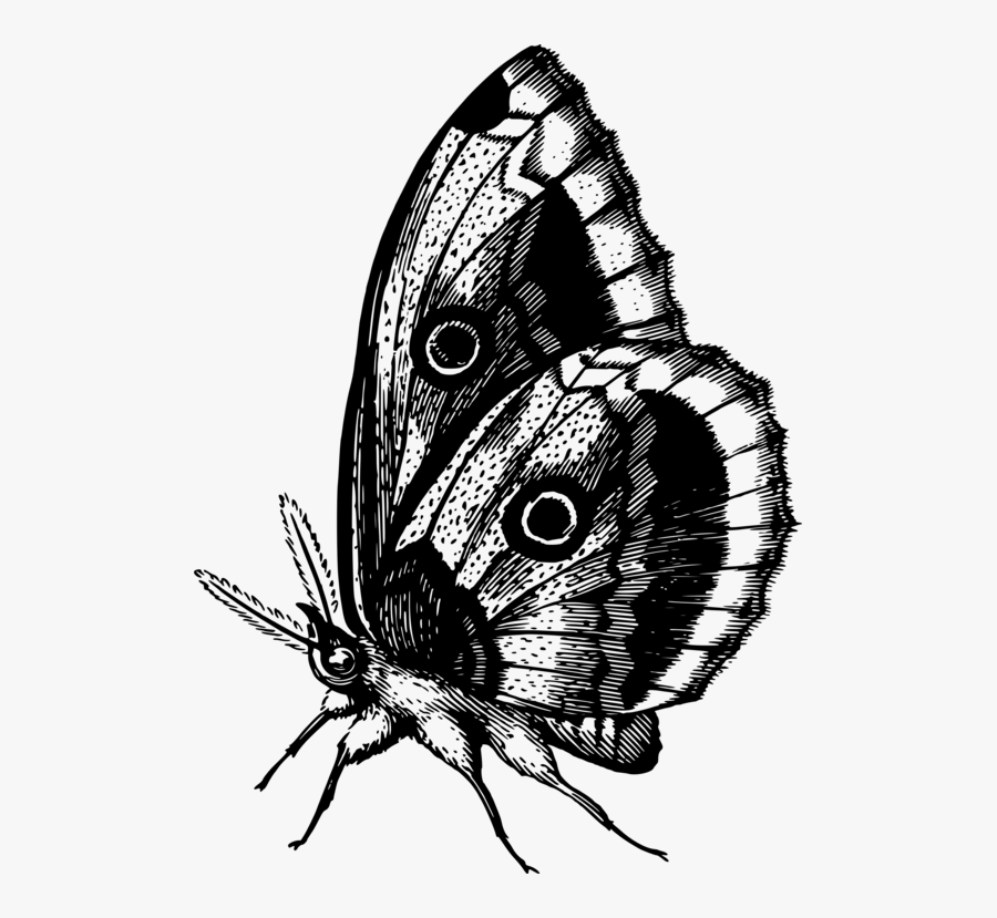 Butterfly,fly,moth - Butterfly Color Full Pic Gif Download, Transparent Clipart