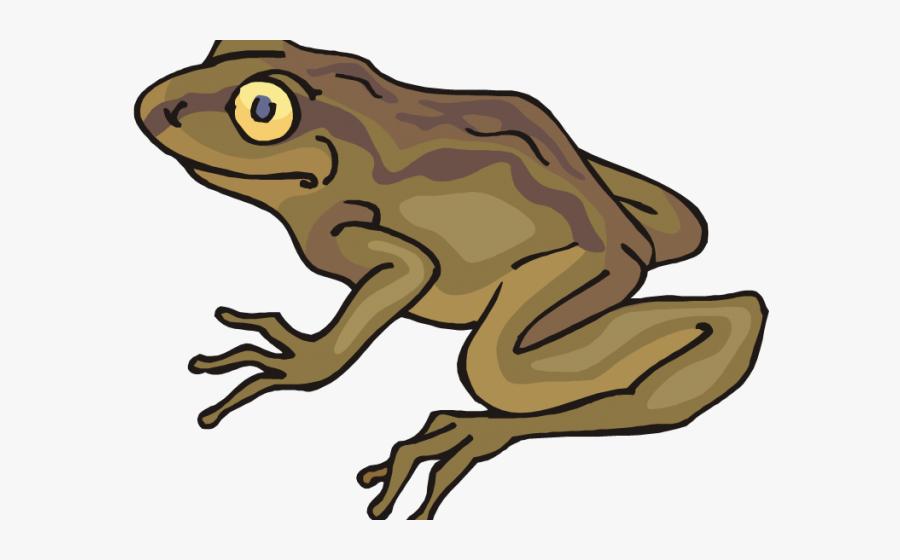 Transparent Cute Frog Clipart - Toad Clipart Png, Transparent Clipart