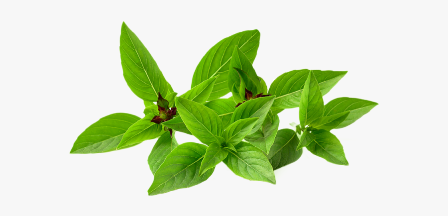 Thai Basil Png, Transparent Clipart