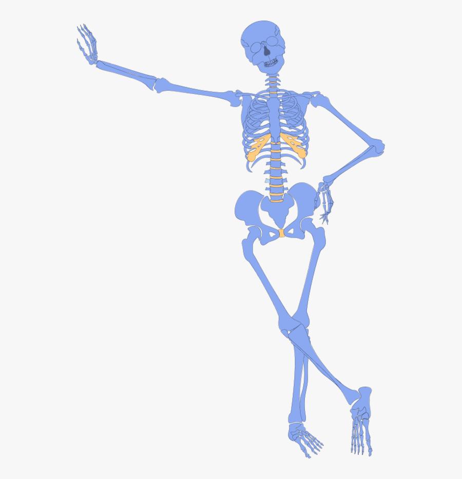 Skeleton Hand On Hip, Transparent Clipart