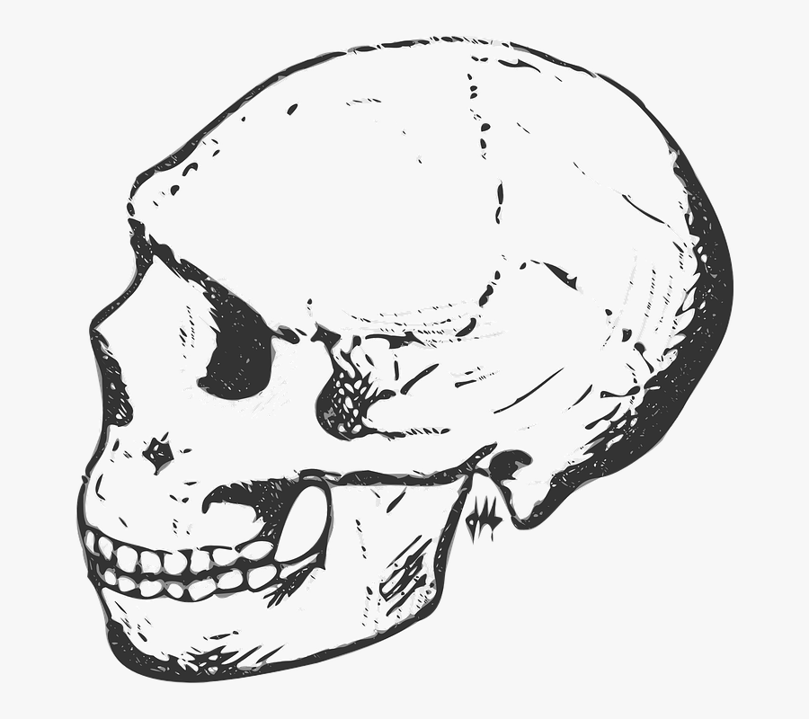 Human Skull Clipart Black And White, Transparent Clipart
