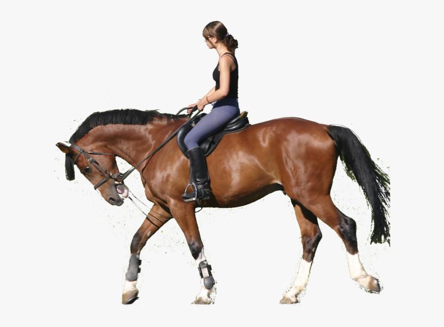 Horse Equestrian Clip Art Portable Network Graphics - Riding A Horse Png, Transparent Clipart