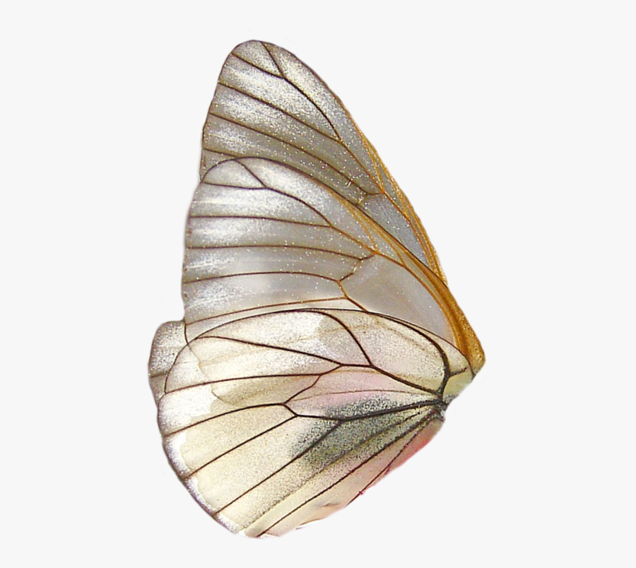 Butterfly Wing Png, Transparent Clipart