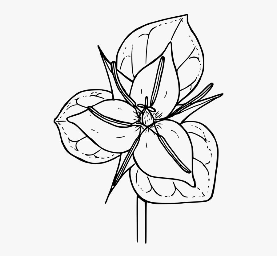 Line Art,plant,flora - Flower Simple Trillium Drawing, Transparent Clipart