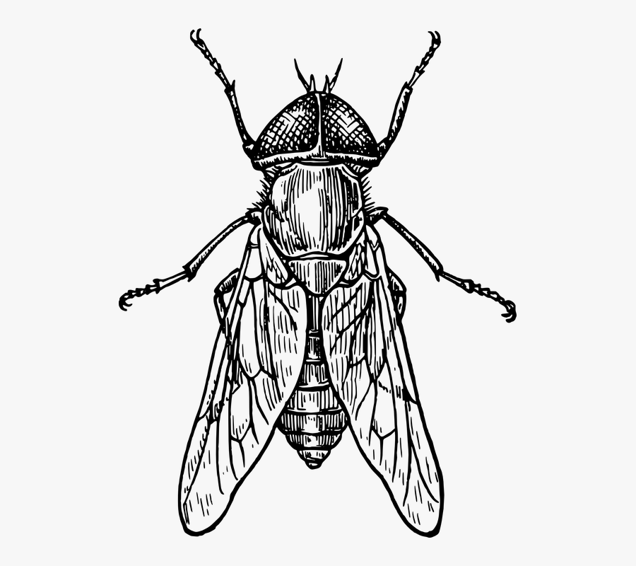 Transparent Fly Black And White Clipart - Insect Clipart Black And White, Transparent Clipart
