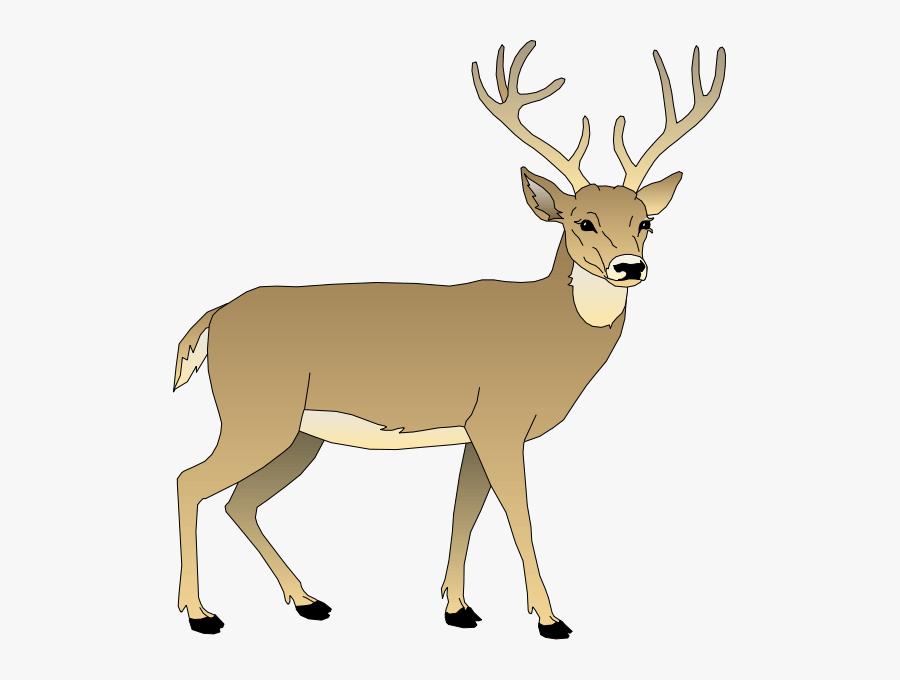 Clip Art Deer - White Tailed Deer Clipart, Transparent Clipart