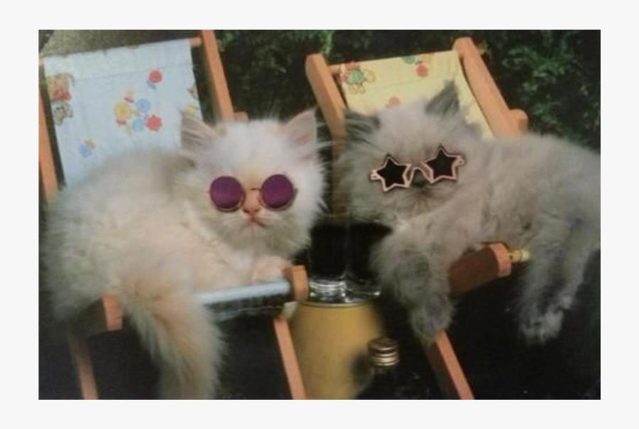 True Power - Kittens Wearing Sunglasses, Transparent Clipart