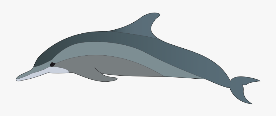 Dolphin Clipart Jumping Dolphin - Bottlenose Dolphin Clipart, Transparent Clipart