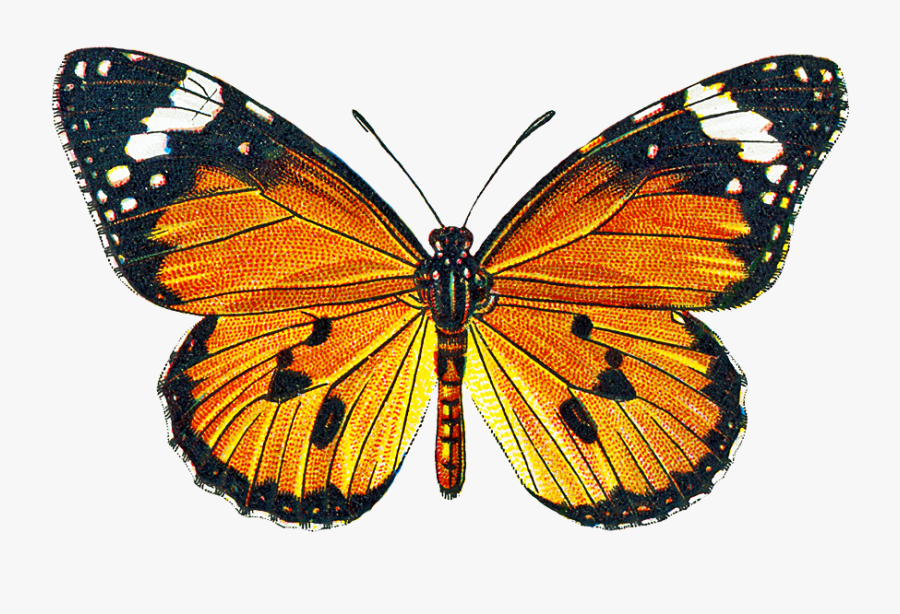 Free Free Pictures Of Butterflies - Transparent Background Vintage Butterfly Png, Transparent Clipart