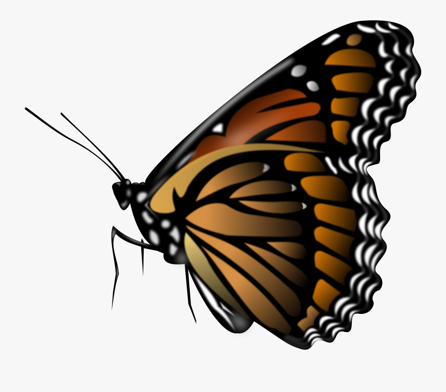 Monarch Butterfly - Brown Butterfly Clipart, Transparent Clipart
