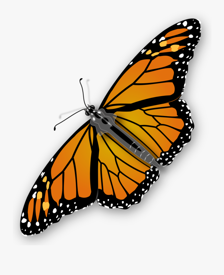 Monarch Butterfly - Transparent Background Butterfly Gif, Transparent Clipart