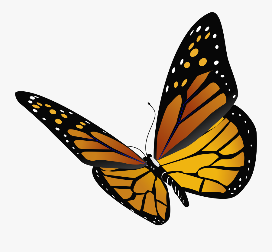 Transparent Close Clipart - Draw A Realistic Butterfly, Transparent Clipart