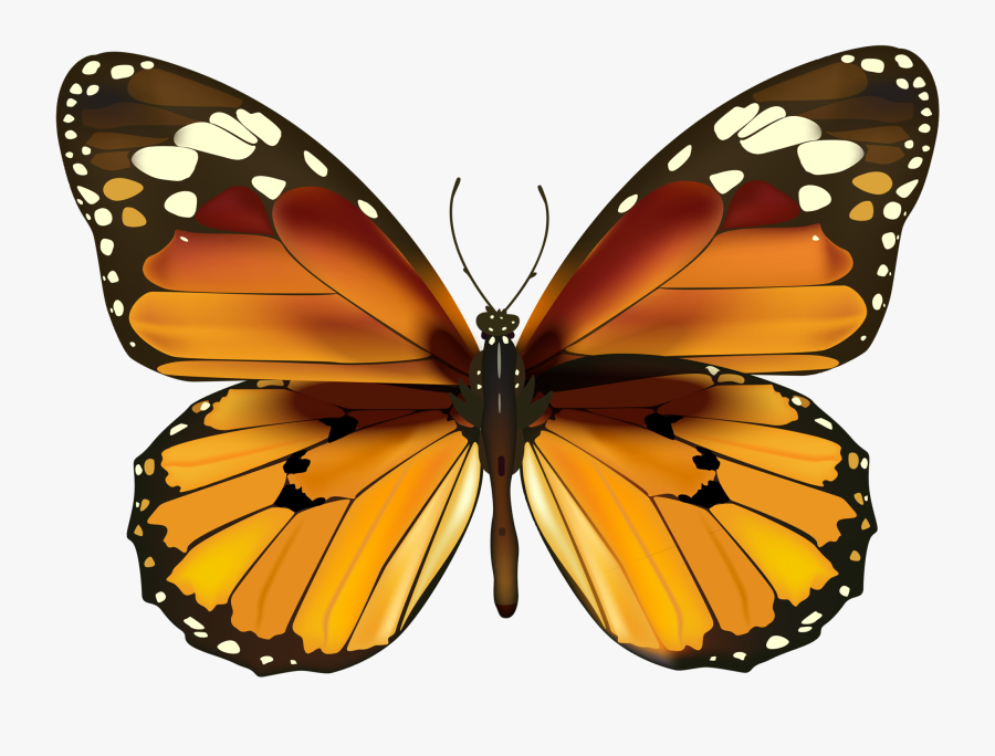 Monarch Butterfly Have Been Seeing A Ton Of These Guys - Happy New Year Butterfly, Transparent Clipart
