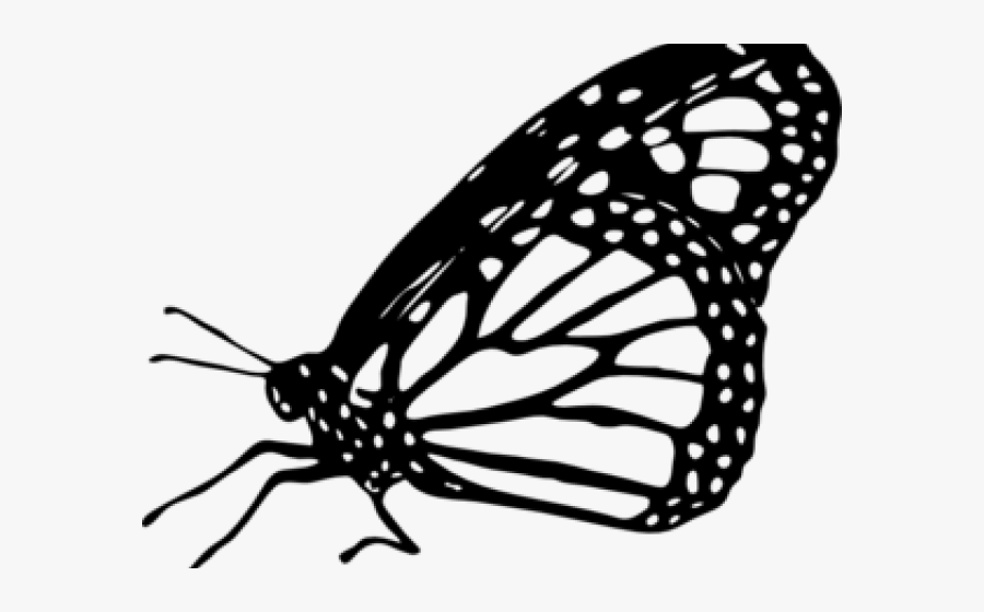 Butterfly Clipart Monarch - Monarch Butterfly Clipart, Transparent Clipart