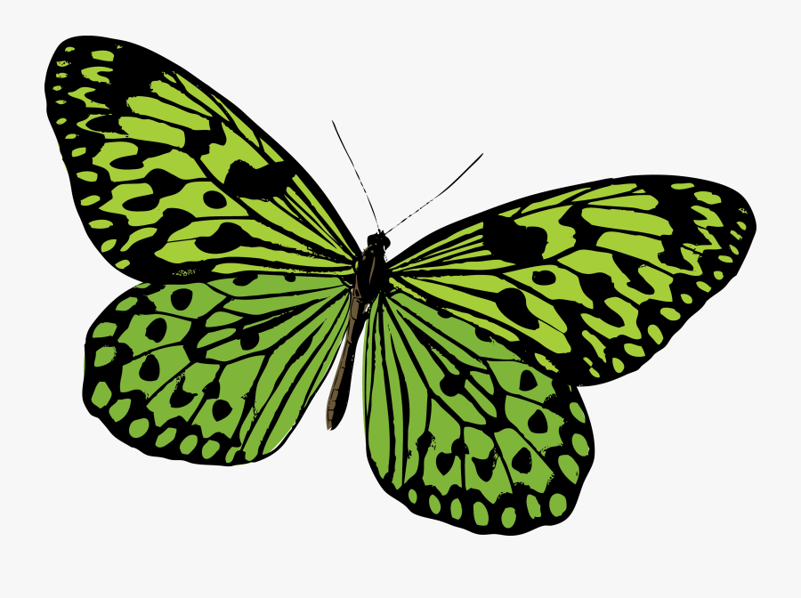 Monarch Butterfly Pieridae Moth - Green Butterfly Vector Png, Transparent Clipart