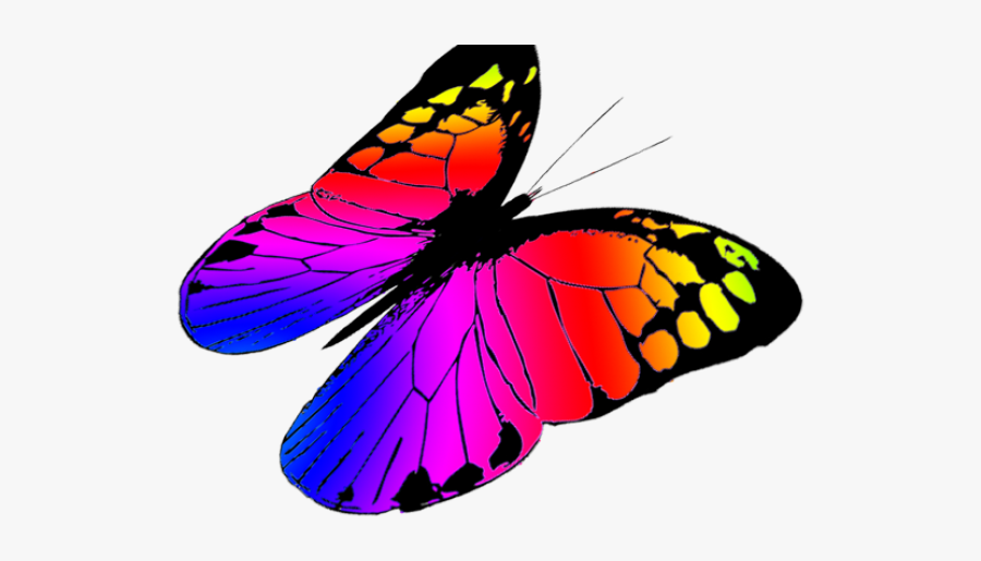 Monarch Butterfly Clipart Betterfly - Colorful Butterflies Flying Png, Transparent Clipart