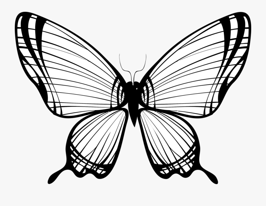 Transparent Monarch Butterfly Clipart - Butterfly Wings Line Drawing, Transparent Clipart