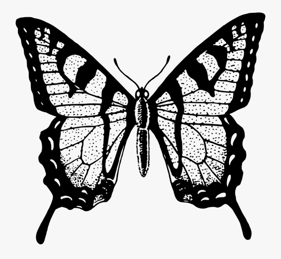Transparent Butterfly Clipart Png Black And White - Brush Footed Butterfly Drawing, Transparent Clipart